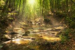 Felik bergskog på floden Royaltyfri Bild