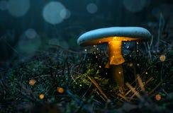 Felik glödande champinjon i den dimmiga skogen royaltyfri foto