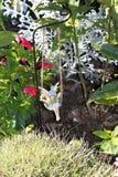 Felik gunga i trädgården Arkivfoto