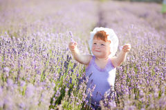 felik lavendel Royaltyfri Foto