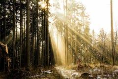 felik skog Royaltyfria Foton