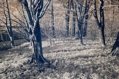 felik skog Royaltyfria Bilder