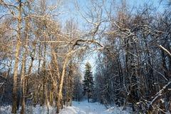 felik skog Royaltyfri Fotografi