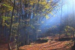 felik skog Arkivbild