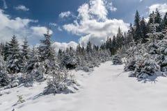 Felik skog för härlig vinter royaltyfria bilder