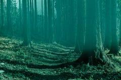 Felik skog i dimma Nedgångträn Förtrollad höstskog i dimma i morgonen gammal tree Landskap med färgrik gräsplan för träd royaltyfri fotografi