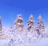 felik skogvinter Royaltyfri Fotografi