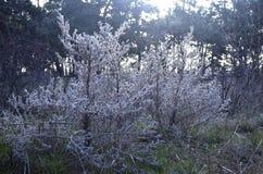 Felika magiska buskar i den djupa skogen royaltyfri illustrationer