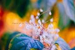 Felika vita små blommor på röd oskarp bakgrund för färgrik drömlik magiguling Royaltyfri Fotografi