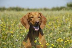 felikt land för härlig hund Royaltyfria Foton