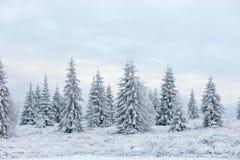 Felikt snöig vinterjullandskap arkivfoto