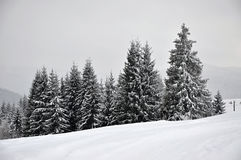 Felikt vinterlandskap med granträd Fotografering för Bildbyråer