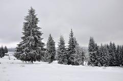 Felikt vinterlandskap med granträd Arkivfoton