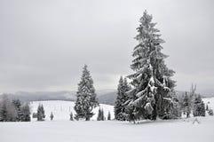 Felikt vinterlandskap med granträd Arkivfoto