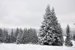 Felikt vinterlandskap med granträd Royaltyfri Foto