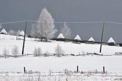 Felikt vinterlandskap med granträd Arkivbild