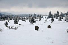 Felikt vinterlandskap med granträd Royaltyfri Bild