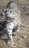 feline royaltyfria foton