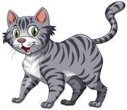 feline stock illustrationer