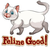 feline stock illustrationer