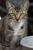 Feline_01 Imagen de archivo