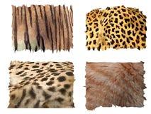 Feline animals fur patterns. Four different kind of feline animals fur patterns Royalty Free Stock Photos