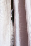 Feline behind curtains. Feline ears whiskers and body behind beige curtains Stock Photo