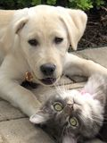 Best Friends Cat Dog playing together. Feline canine laying down Stock Photo