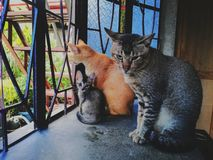 feline familj royaltyfri foto