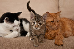 Feline Family Stock Photo