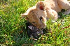 Feline Family Stock Photos