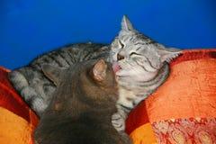 Feline friends stock images