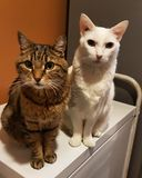 Feline Friends stock images