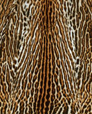 Feline fur background Stock Photos