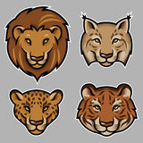 Feline heads Royalty Free Stock Photography