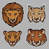 Feline heads. Set of stylized feline heads on grey background. Vector Illustration Royalty Free Stock Photography