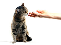 Feline hemhjälp royaltyfri foto