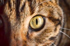 Feline Look royaltyfri bild