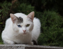 Feline look. A feline look for the cutest of cats royalty free stock image