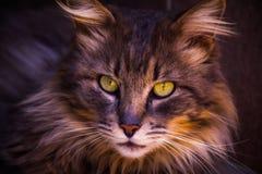 Feline love Stock Photos