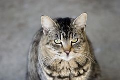 Feline Portrait. Simple photo of a pet housecat Royalty Free Stock Photos
