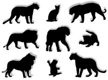 Feline silhouettes Stock Photo