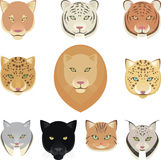 Felines leopard panther lion tiger cougar jaguar heads collectio Stock Photography