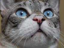 felino imagen de archivo