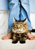 Felino & piedi Fotografie Stock Libere da Diritti