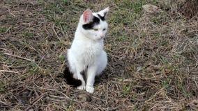 Felino in in bianco e nero stock footage