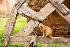 felino en África y cara dulce imagen de archivo