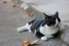 Felino en blanco y negro Imagen de archivo libre de regalías