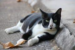 Felino en blanco y negro Fotografía de archivo
