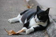 Felino en blanco y negro Fotos de archivo